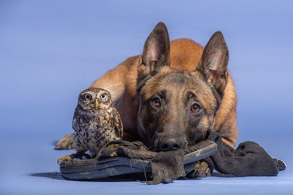 dog-owl-friendship-tanja-brandt-4