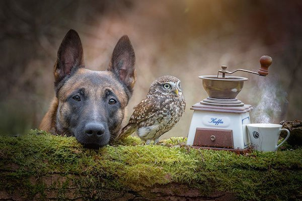 dog-owl-friendship-tanja-brandt-7