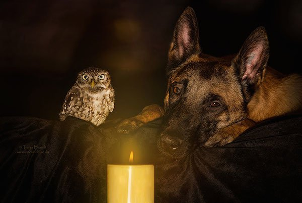 dog-owl-friendship-tanja-brandt-9