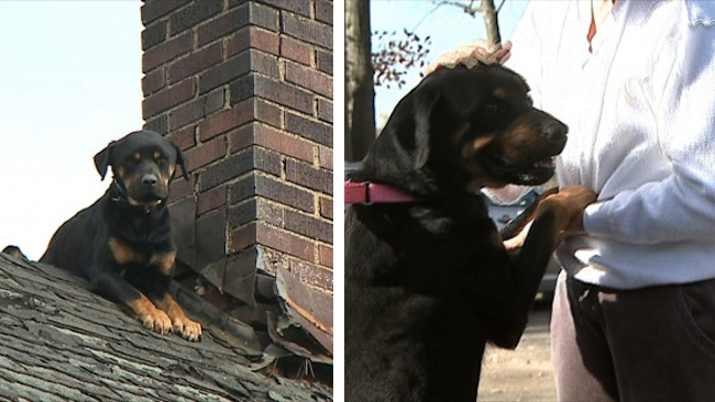 Firefighters Rescued A Dog That Was Stuck On The Roof For