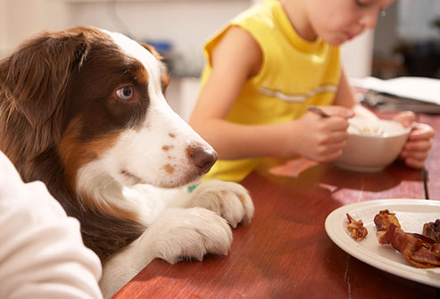 getty_rf_photo_of_dog_begging_at_table