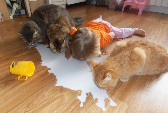 1-They will figure out a new way to drink milk with cats, like this one!