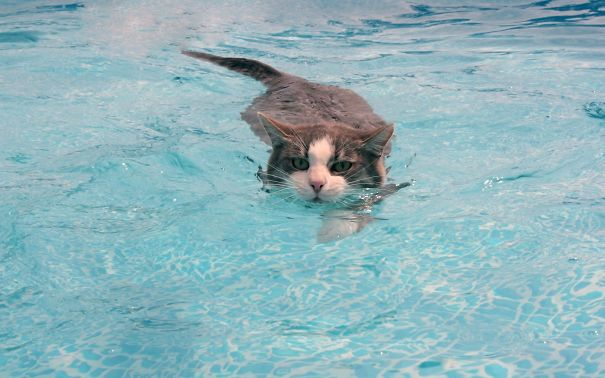 7-Just keep swimming kitty, you're doing it right.