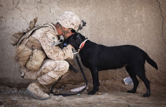 military-dog-and-handler