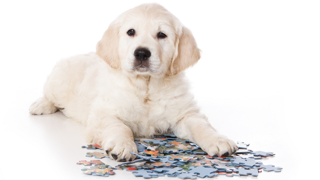 puppy-with-puzzle