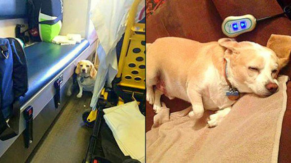 11.14.14-Dog-Hitches-a-Ride-on-Side-of-Ambulance-to-Be-with-Owner1-590x331