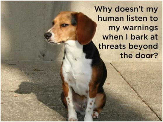 Pay attention to your dog's barks!