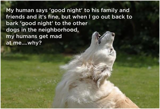 Why get mad at your dog when he is barking for his dog friends in the neighborhood? They're just greeting each other!