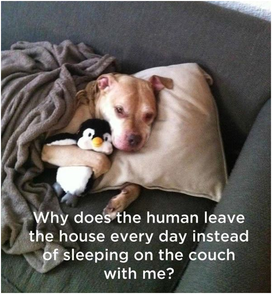 Don't leave your dog alone, it will be amazing to sleep beside him on the couch!