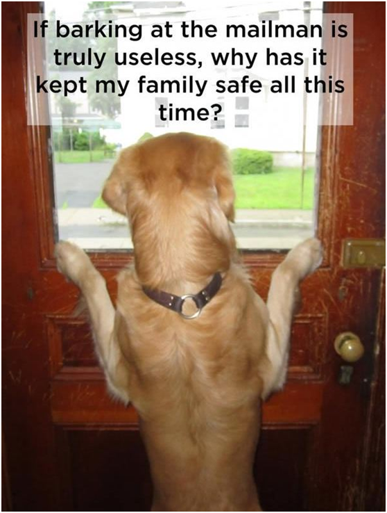 Every dog owner will relate, we know that your dog has endless and hilarious adventures with the mailman.