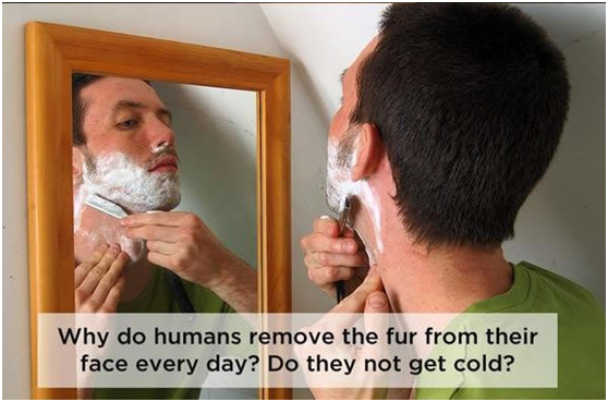 That's what your dog is thinking when you're shaving.