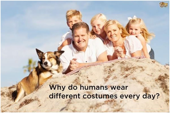 This is what your dog thinks about clothes!