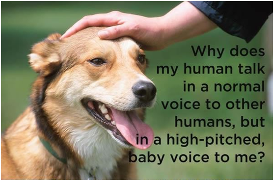 So how do you speak with your dog, with a normal or high – pitched voice?