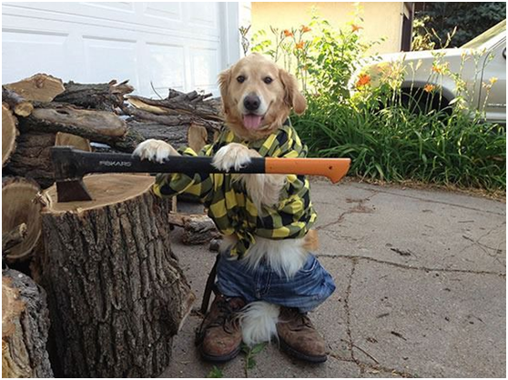 The Carpenter dog, let's cut the trees! Get to work people!