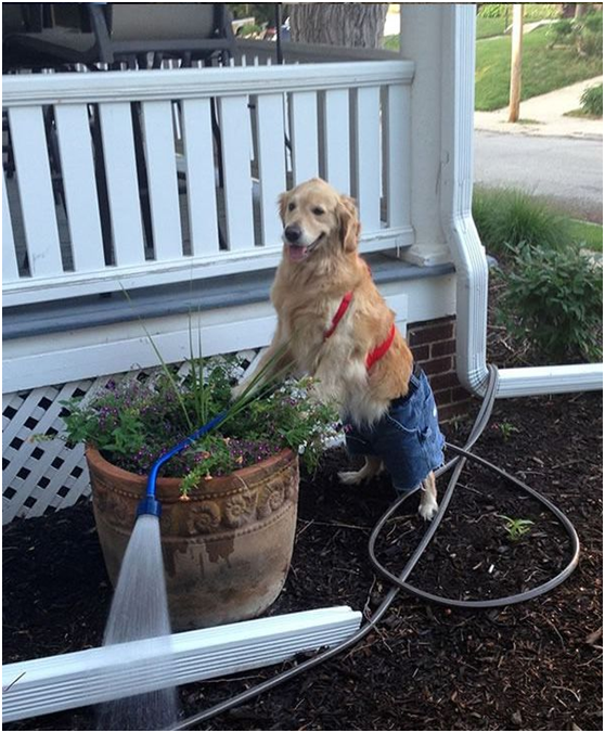 And doing some gardening jobs…
