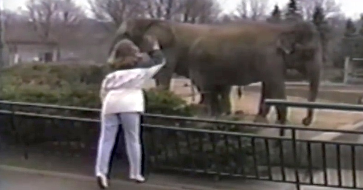 Elephant-plays-a-friendly-game-of-catch-