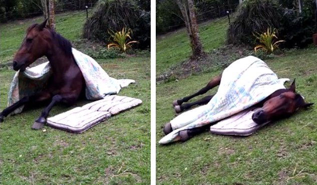 Funny-cute-horse-bedtime