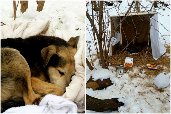 2.19.15-Woman-Sleeps-in-NYC-Park-to-Save-Senior-Feral-Dog4-590x394