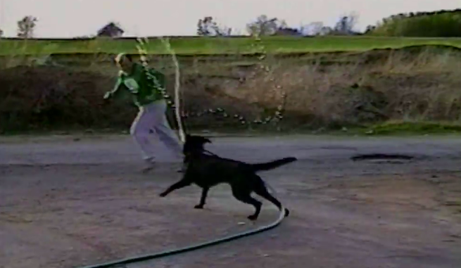 Labrador-dog-fun-video