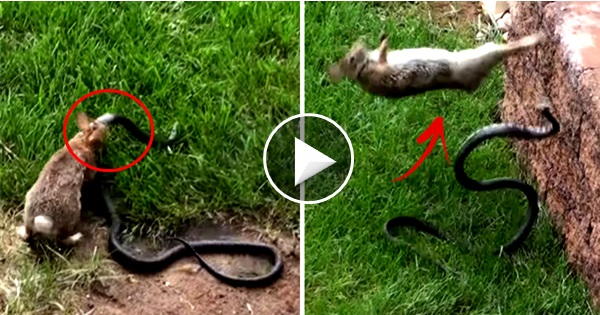 What this brave mother rabbit did to the snake blew my ...