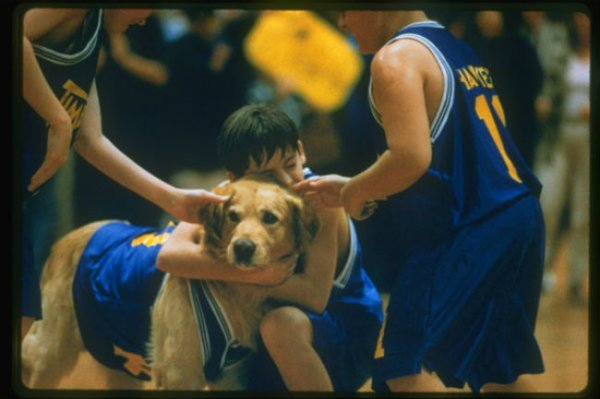 air-bud-image-updated-600x399