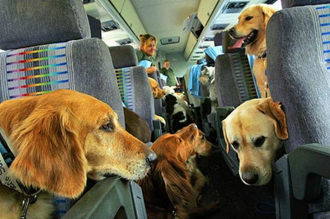 airplanedogs