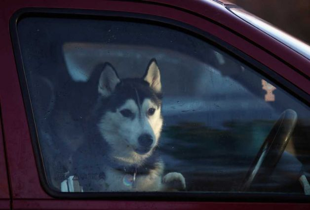 dont-you-ever-live-your-dog-alone-in-the-car.-This-can-be-very-dangerous