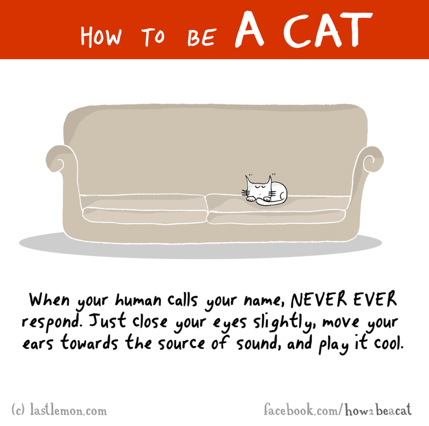 how-to-be-a-cat-funny-illustration-last-lemon-10__880