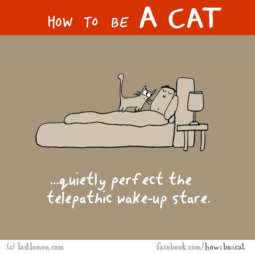 how-to-be-a-cat-funny-illustration-last-lemon-27__880