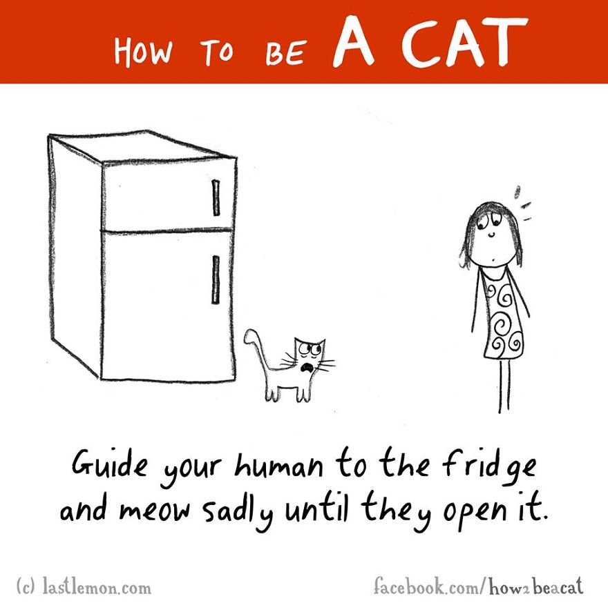 how-to-be-a-cat-funny-illustration-last-lemon-30__880