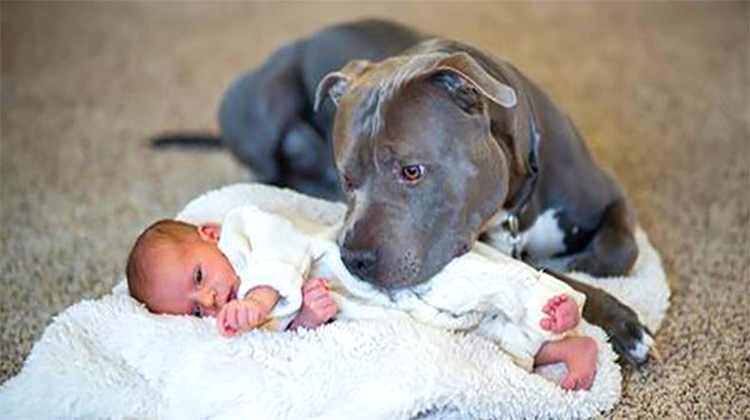 Many dog owners are terrified when they are having a baby they are scared that their dog would somehow hurt their baby and they might end up giving up on