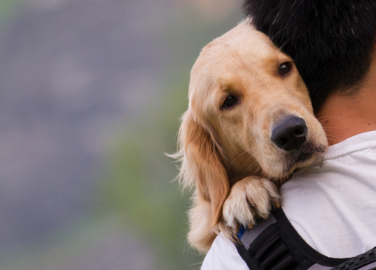 Who will be your dog's caretaker if you are not at home?