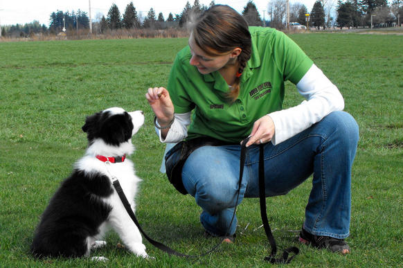 Are you going to get the dog a trainer or take him to training classes?