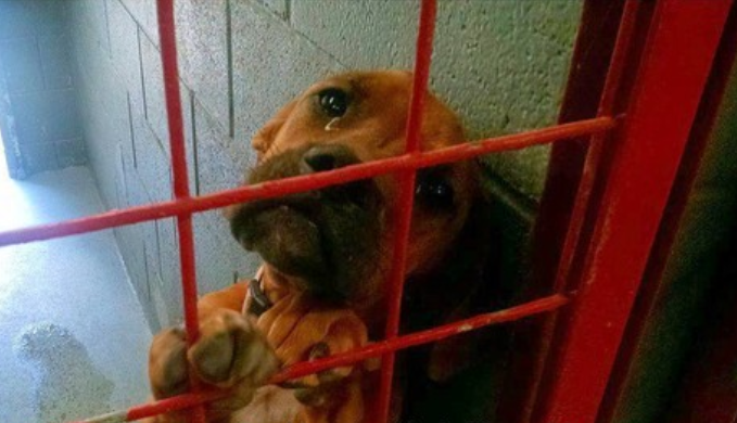 portal-animal-shelter-dog