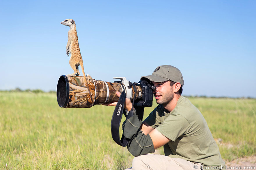 animals-with-camera-helping-photographers-2__880