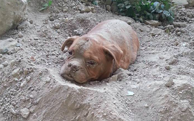 dog-buried-alive-ft-618x386