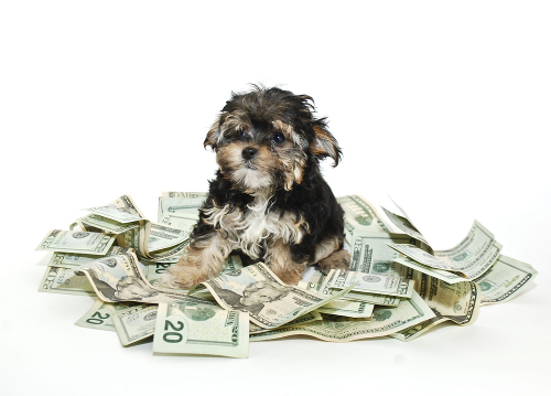 You know how much does it cost in a year to have a dog? Are you ready for it?