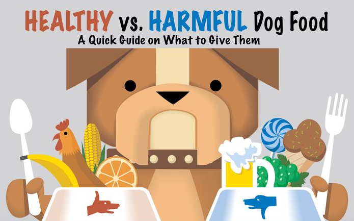 Healthy Table Food For Dogs