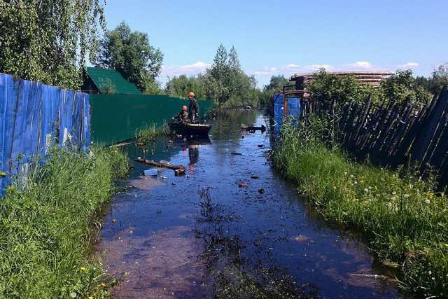 PAY-Two-kittens-were-plucked-to-safety-from-a-deadly-oil-spill-in-russia-5