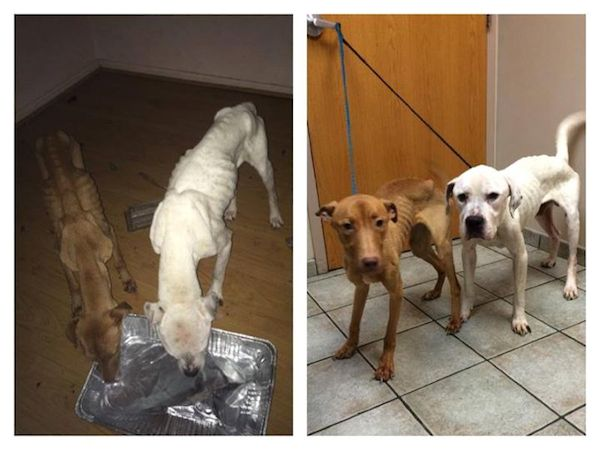 starving-dogs-recover-3