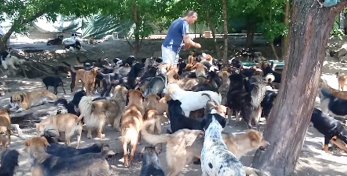 450-dogs-rescued-haven-serbia