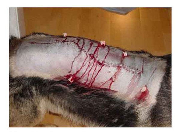 Foxtails Can Actually Kill Your Dog Must Read