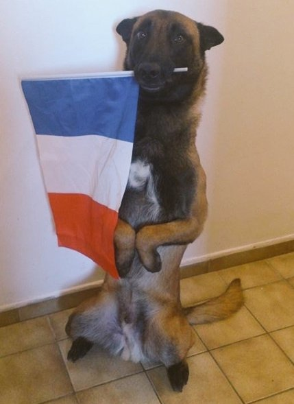 french-german-shepherd-dog-killed-in-raid