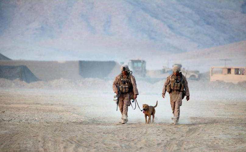 dog-with-soldiers-808x500