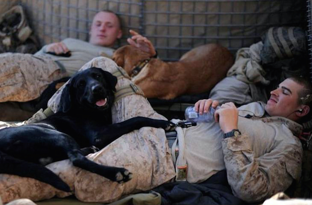 marines-with-dogs