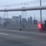 Cops go on a high-speed chase after a tiny puppy. But look closely at the motorcyclist