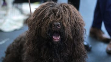 cut dog hair featured image