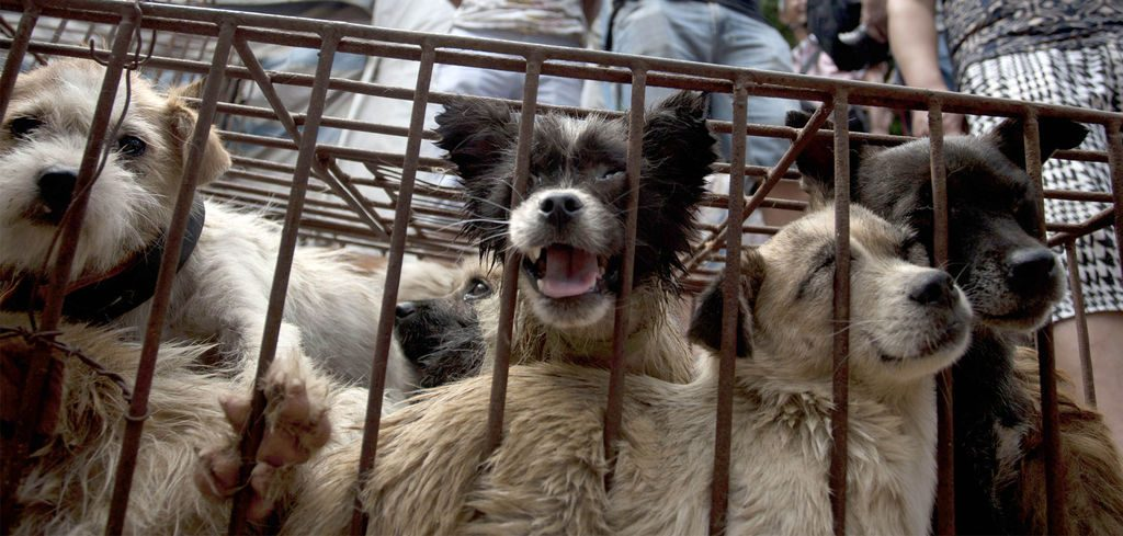 eating dogs - dog meat trade