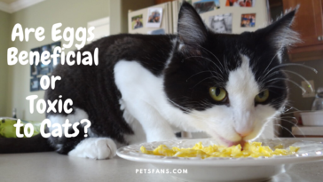 Can Cats Eat Eggs? Are Eggs Beneficial or Toxic to Cats?