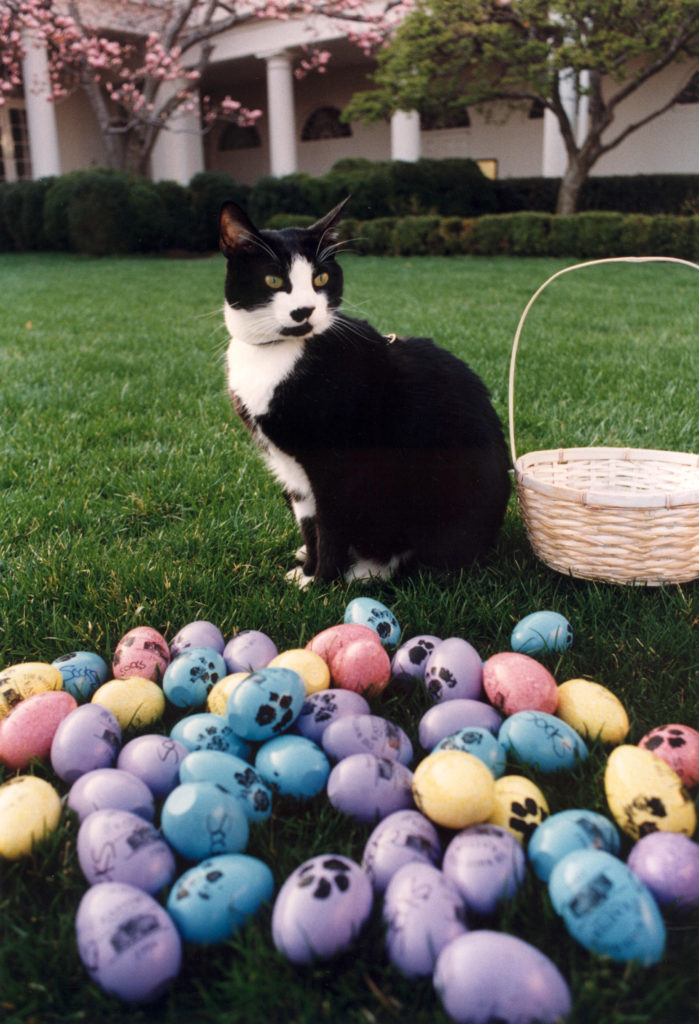 Can Cats Eat Eggs? Are Eggs Beneficial or Toxic to Cats? A cat standing behind colorful eggs